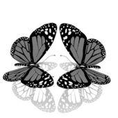 Schoonheid vlinders — Stockfoto