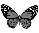 Schoonheid vlinder — Stockfoto