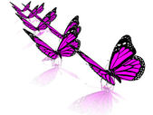 Violet butterflies — Stock Photo