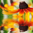Closeup of orange flower reflected in the water — Stock Photo #16245349