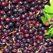 Currant as background — Stock Photo #27402299