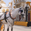 White horse drawing a carriage - Stock Photo