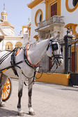 White horse drawing a carriage — Stock Photo