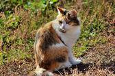 Cat looks away — Stock Photo