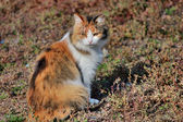 Beautiful three-colored cat in nature — Stock Photo