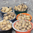 Stock Photo: Harvested potatoes in buckets