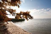 Herfst oever van het meer — Stockfoto
