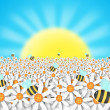 Bees and flowers on sunshine — Stock Photo