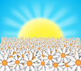 Flowers and sunset — Stock Photo