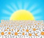 Flores y puesta del sol — Foto de Stock
