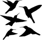 Hummingbird silhouettes vector — Stock Vector