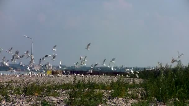 Gaviotas en el borde de la presa — Vídeo de stock