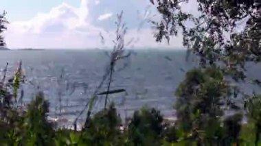 время перерыва лес у моря — Стоковое видео