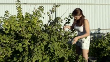 A young woman and a blackcurrant bush — ストックビデオ