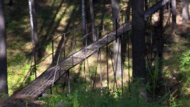 Висячий мост в лесу — Стоковое видео