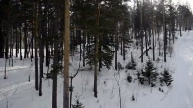 View on winter forest with ski lift — Stock Video