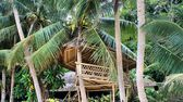 Bamboo house in a coconut grove. — Stock Photo
