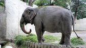 Large Indian elephant eats tasty green grass — Foto de Stock
