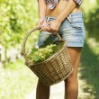 Vintner picking grapes in vineyard — Stock Photo #13274143