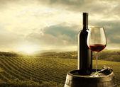 виноградник на закате — Стоковое фото
