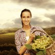 Vintner picking grapes in vineyard — Stock Photo #14814915