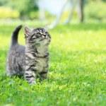 Kitty — Stock Photo #27338455