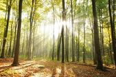 Skog — Stockfoto