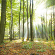 Morning in the forest — Stock Photo #22253087
