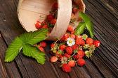 Lesní jahody — Stock fotografie