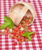 Fragoline di bosco — Foto Stock