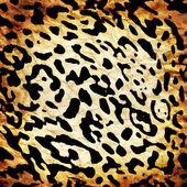 Leopard pattern — Stock Photo