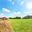 Rural landscape — Stock Photo