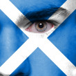 Human face painted with flag of Scotland — Stock Photo