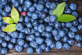 Blueberries — Zdjęcie stockowe