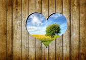 Heart in a wooden wall — Stock Photo