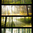 Stock Photo: Forest collage