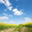 Yellow oilseed rape field under the blue sky — Stock Photo #30277981