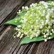 Lilly of the Valley — 图库照片