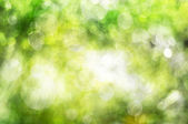 Natural green blur abstract sparkles background. — Stock Photo