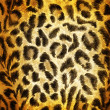 Cheetah pattern — 图库照片