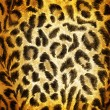Cheetah pattern — Stock Photo