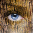 Human face with open eye covered in a tree bark texture — Stock Photo