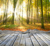 Empty wooden table and green forest — Stock Photo