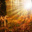 Magical autumn forest — Stock Photo
