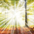 Sun beams in foggy forest — Stockfoto