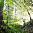 Beautiful morning in the forest — Stock Photo #30473967