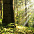 Beautiful morning in the forest — Stock Photo