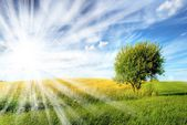 Field,tree and blue sky. — Stock Photo