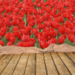 Empty table with tulips field background — Foto Stock