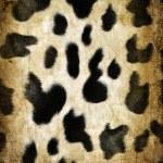 Cow pattern — Stock Photo #32125543